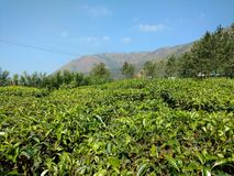 Reticolo verde del giardino del foglio (mare Immagine Stock Libera da Diritti