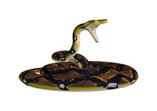 Reticulated Python on White Royalty Free Stock Image