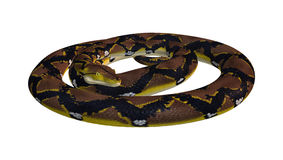 Reticulated Python on White Royalty Free Stock Photography