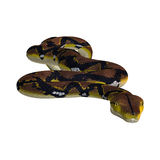 Reticulated Python on White Stock Photography