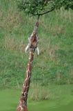 Retikulierte Giraffe stockbild