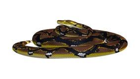 Retikulierte Pythonschlange auf Weiß stockfotos