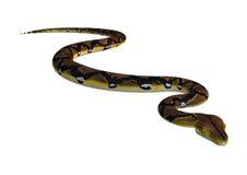 Retikulierte Pythonschlange auf Weiß stockfotografie