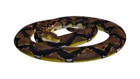 Retikulierte Pythonschlange auf Weiß lizenzfreie stockfotografie
