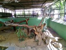 Retikulierte Pythonschlange an katraj Zoo lizenzfreie stockfotografie