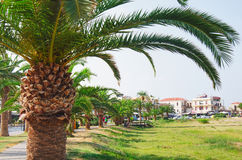 RETIMNO, CRETE, GREECE. RETIMNO,CRETE, GREECE- SEPTEMBER - 09 - 2016: Palms on the beach of Retimnon bay. Crete, Greece Royalty Free Stock Photos