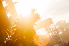 Retire o festival 2015 - dançarino no traje indiano no nascer do sol sobre Imagens de Stock