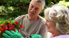 Retired couple gardening together stock video