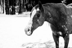 Retired horse Stock Photo