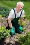 Retired man cultivating the garden Royalty Free Stock Photos
