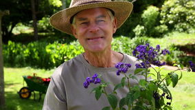 Retired man gardening and smiling at camera. At home in the garden stock video footage
