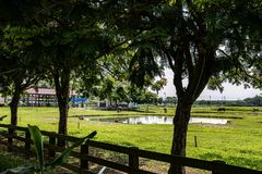 Retired old cow`s home. Tainan City, Taiwan has a place where retired old cattle live. They hired people with cattle experience to take care of them. Will not be royalty free stock photography