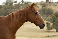 Retired Race Horse Stock Images