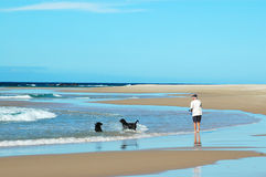 Retired senior man. A happy retired caucasian senior man walking his two black Labrador Retriever dogs on a lonely beach in summer Royalty Free Stock Photography