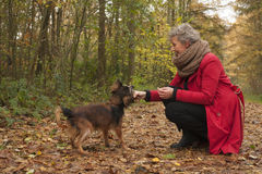 Retired woman and her dog Royalty Free Stock Photos