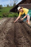 Retired woman planting seeds. Photo of a retired woman in her sixties planting seeds in her garden Royalty Free Stock Image
