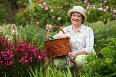 Retiree female gardener pink flowers Royalty Free Stock Photos
