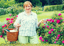 Retiree gardener basket Stock Photos