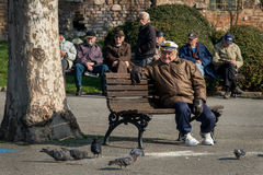 Retirees in the park looking pigeons Royalty Free Stock Photo
