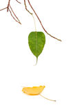 Retirement. Concept - leaves on isolated background Stock Photography