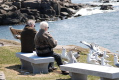 Retirement. Here is a retired couple sitting on a bench up in Maine feeding the birds on a cool spring afternoon Royalty Free Stock Photography