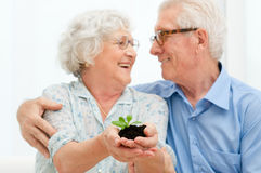 Retirement savings and investements. Elder smiling loving couple holding fresh green sprout, symbol of good bank investement for the retirement royalty free stock images
