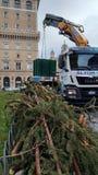 Retiro del árbol de navidad Spelacchio de la plaza Venezia, Ro Foto de archivo libre de regalías