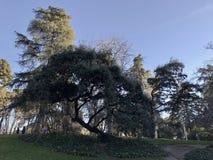Retiro Park Stockfotografie