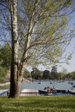 Retiro's park lake in Madrid Royalty Free Stock Image