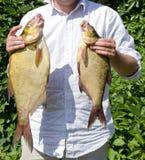 Retén del éxito del pescador de la brema de los pescados de los pares del asimiento de la mano Foto de archivo