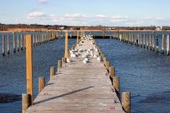 Retorno das gaivotas à mola bem-vinda Fotos de Stock