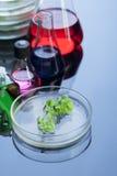 Retotr пробирки и зеленый росток Стоковые Фото