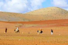 Retour après la récolte au dos d'une mule images libres de droits