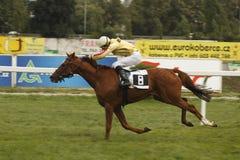Retourn dans la course de chevaux de rue Leger Images libres de droits