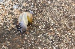 Retournement d'escargot image stock