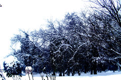 Retranchez-vous l'erski de ` de DunÄ, Serbie, hiver, voyage, Kulpin photographie stock