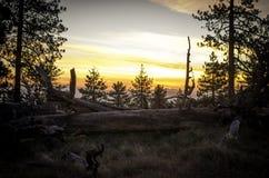 Retratamiento de la montaña del pino Fotos de archivo libres de regalías