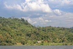 Retratamiento de la selva Fotografía de archivo