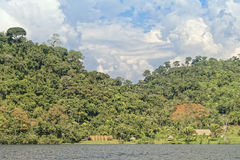 Retratamiento de la selva Imagen de archivo libre de regalías