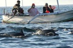 Retrate os golfinhos Fotografia de Stock Royalty Free