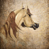 Retrato árabe do cavalo ilustração royalty free