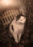 Retrato al aire libre de la primavera del gato del país Fotos de archivo libres de regalías