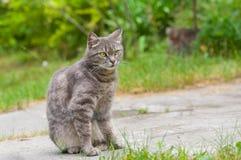 Retrato al aire libre del gato de gato atigrado guardado imagen de archivo