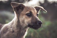 Retrato amável considerável novo do cachorrinho imagens de stock royalty free