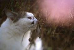 Retrato ascendente de la caída del cierre del gato del país Fotografía de archivo libre de regalías