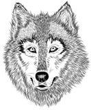 retrato blanco y negro del lobo peludo stock de ilustración