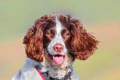 Retrato bonito do cão imagens de stock