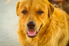Retrato bonito do cão Imagem de Stock