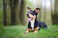 Retrato bonito do cão no meio do mais forrest na mola Fotografia de Stock Royalty Free