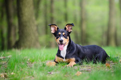 Retrato bonito do cão no meio do mais forrest no si da mola Imagem de Stock
